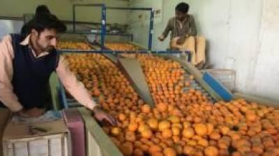 زرعی ملک ہونے کے باوجود 6 ماہ میں 3 سو ارب کی کھانے پینے کی اشیاء برآمد