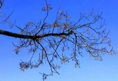 محکمہ موسمیات کے مطابق آئندہ چوبیس گھنٹے میں ملک کے بیشتر علاقوں میں موسم سرد اور خشک رہے گا۔