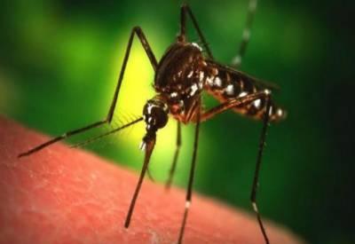 کراچی میں ایک ماہ کے دوران 20افراد میں چکن گنیا وائرس کی تصدیق