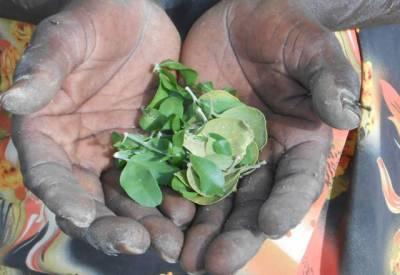جنوبی سوڈان میں قحط کے باعث لوگ درختوں کے پتے اور بیج کھاکر گزارہ کرنے لگے۔