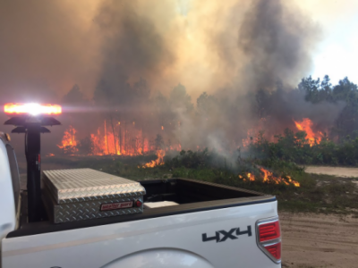 فلوریڈا کے جنگلات میں لگی آگ بے قابو ہو گئی،،