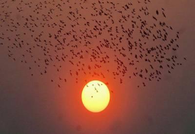 ملک میں گرمی کی شدت دن بدن اضافہ جاری۔