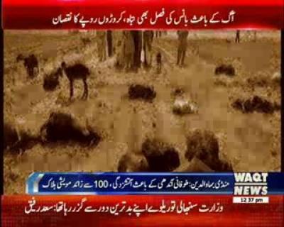 منڈی بہاوالدین: طوفانی بارش اور آندھی کی وجہ سے آگ بھڑک اتھی ۱۰۰ سے زیادہ مویشی ہلاک