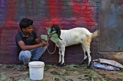 """انڈیا میں گائے کو قومی جانوراور بکری کو"""" قومی بہن"""" قرار دینے کا مطالبہ"""