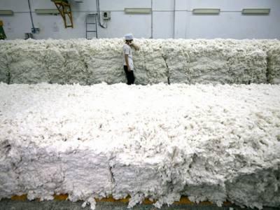 نئی فصل کی روئی کا پہلا سودا 7 ہزار روپے من میں طے