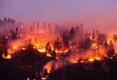 کینیڈا کے جنگلات میں آتشزدگی، 40 ہزار افراد محفوظ مقام پر منتقل
