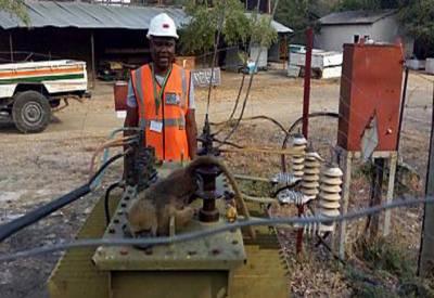 زیمبیا میں لنگور نے ہزاروں افراد کو بجلی سے محروم کر دیا۔