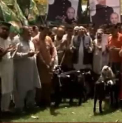 مختلف شہروں میں بھی کارکنوں اور رہنماؤں کی جانب سے صدقے کے بکرے قربانیاں دی گئی