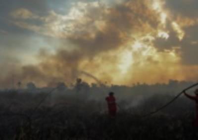 انڈونیشیا کے جنگلات میں لگی آگ میں مسلسل اضافہ ہو رہا ہے