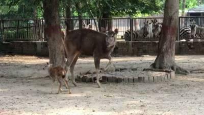 لاہور:چڑیا گھرمیں پہلی مرتبہ سانبھر ہرن کے بچے کی پیدائش
