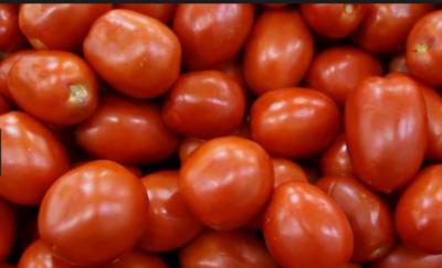لاہور، ملتان، راولپنڈی میں ٹماٹر کی قیمت 200 سے 250 روپے کلو تک پہنچ گئی