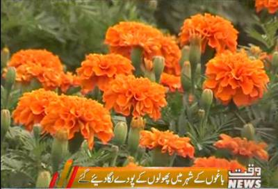 باغوں کے شہرلاہور کی خوبصورتی کو مزید بڑھانے کیلئے پھولوں کے پودےلگائے جارہے ہیں