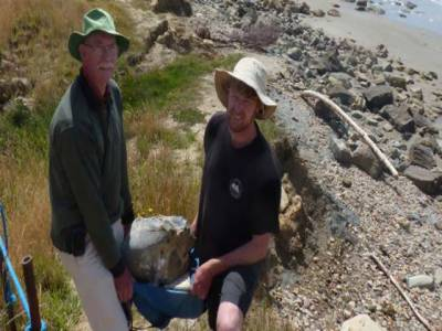 نیوزی لینڈ میں دنیا کے سب سے بڑے پرندے کی باقیات دریافت