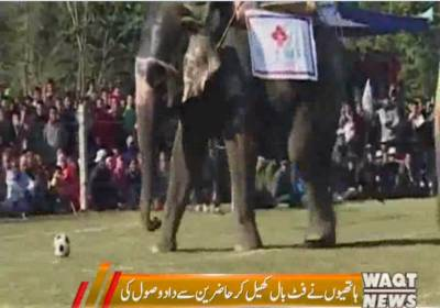Elephants Football Match Festival Celebrated in Nepal