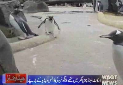 Waqtnews Headlines 12:00 PM 04 January 2017