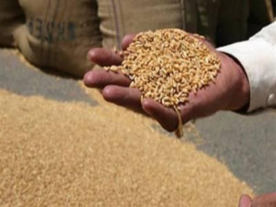 عالمی خریداروں کی پاکستانی گندم میں دلچسپی، برآمدات 5.5 ملین ٹن تک پہنچ گئیں۔