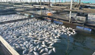 کوئلے کی کان سے نکلنے والے پانی سے مچھلی کی افزائش:تھر