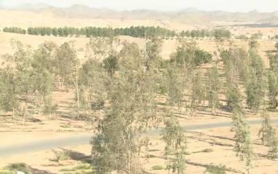 سعودی عرب کا ماحولیاتی تحفظ کے لئے ایک کروڑ درخت لگانے کا فیصلہ