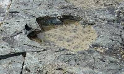 اسکاٹ لینڈ کے ماہرین نے تاریخ کے سب سے بڑے ڈائنو سار کے قدموں کے نشانات دریافت کئے ہیں .