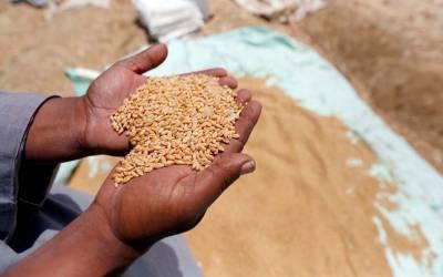 اپریل کے دوران گندم کی برآمدات کا حجم ریکارڈ 3لاکھ ٹن سے تجاوز کرگیا۔
