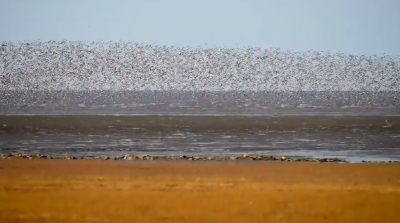 A view of massive flocks of migratory birds flying in China