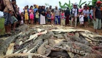 انڈونیشیا میں مشتعل ہجوم نے ایک کسان کو ہلاک کرنے پر 300مگر مچھوں کو مار ڈالا