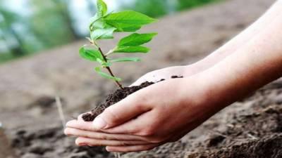 نگران وزیراعظم ناصر الملک نے آج اسلام آباد میں چیڑھ کا پودا لگاکر موسم برسات کی شجرکاری مہم کا افتتاح کیا