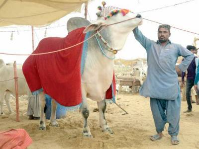 کراچی میں ایشیا کی سب سے بڑی مویشی منڈی سج گئی۔