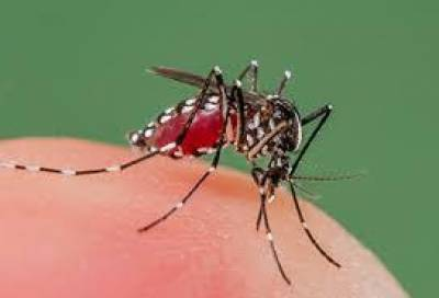 جنوبی وزیرستان میں ملیریا اور لیشمینیا نے وبائی شکل اختیار کرلی
