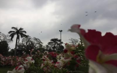 ملک کے مختلف شہروں میں بارش اور ٹھنڈی ہواؤں سے موسم سہانا ہوگیا۔