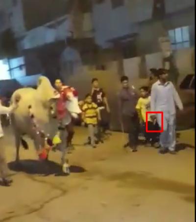 کراچی:قربانی کی بیل کےساتھ اسلحے کی نمائش کرنیوالا شہری رینجرز کے ہاتھوں گرفتار