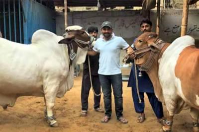 سرفراز احمد نے بھی قربانی کے جانور خرید لئے