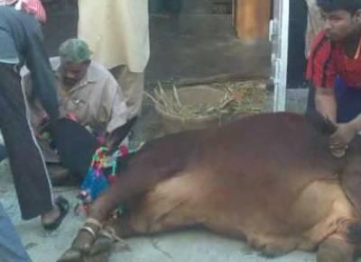 عیدالاضحی کے دوسرے روز بھی جانوروں کی قربانی کا سلسلہ جاری ہے،