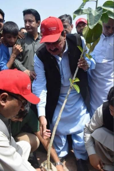وزیر ریلوے شیخ رشید نے اسلام آباد میں پلانٹ فار پاکستان مہم کے تحت پودا لگایا۔