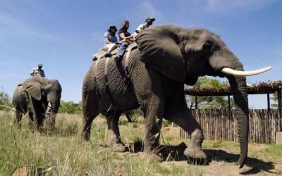 جنوبی افریقہ سرمایہ کاری اور سیاحت کے ویزوں میں نرمی کرے گا۔