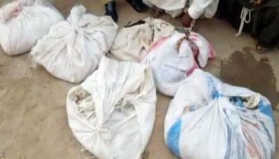 بدین میں محکمہ وائلڈ لائف کا چھاپہ، گاڑی سے 11 سو زہریلے سانپ برآمد، 2 ملزم گرفتار