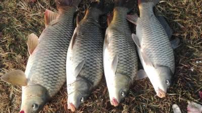 منگلا ڈیم کے نام فارمی مچھلی کی مہنگے داموں فروخت جاری