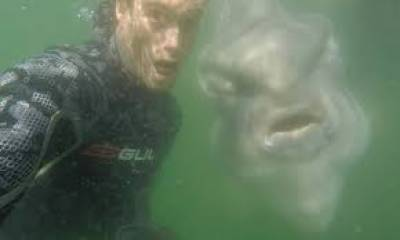 دنیا کی سب سے وزنی سن فش sunfishکے سپیشل سیلفی پوز انٹر نیٹ پر وائرل ہو گئے
