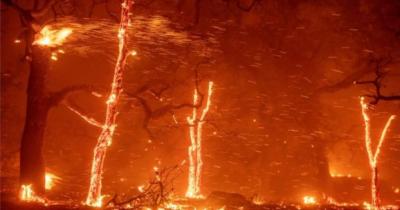 کیلیفورنیا کے جنگلوں میں آگ، مرنے والوں کی تعداد 25 ہو گئی