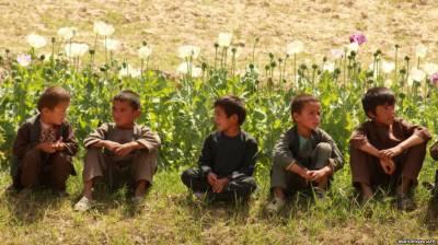 افغانستان میں افیون کی کاشت میں کمی ہوئی ہے۔ اقوام متحدہ