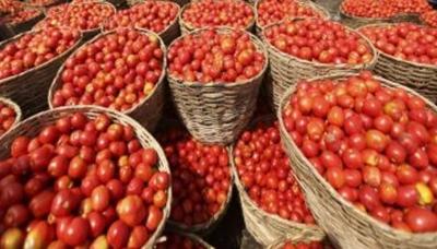 وفاقی دارالحکومت اسلام آباد میں ٹماٹر کی قیمتوں میں غیر معمولی اضافہ