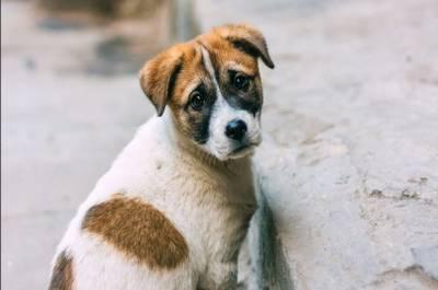 گجرات: تھانہ اے ڈویژن میں گورنمنٹ کی ایک ریٹائرڈ ملازمہ نے پانچ افراد کے خلاف کتے کے قتل کا مقدمہ درج کروایا دیا،