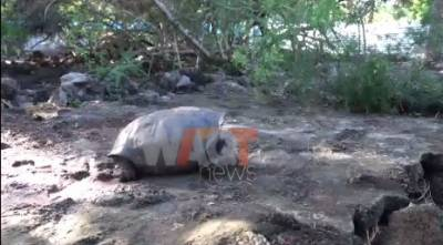 Extinct giant tortoise rediscovered in Galapagos Islands