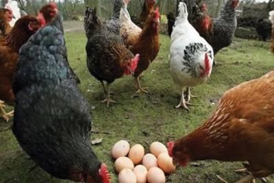مرغی پال اسکیم مؤخر، پنجاب اسمبلی میں تحریک التوا جمع