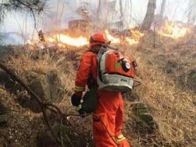 چین: جنگلات میں ہولناک آتشزدگی کے باعث 26 فائر فائٹرز ہلاک