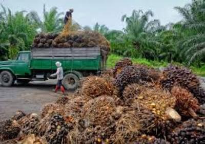 ملائیشین مارکیٹ میں پام آئل کے نرخوں میں اضافہ