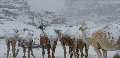 سعودی عرب میں برف باری، پہاڑوں نے سفید چادر اوڑھ لی