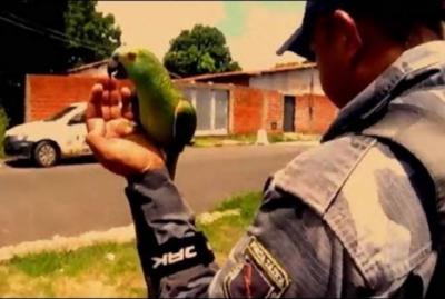 برازیل میں منشیات فروش کو پولیس کے چھاپے پر خبردار کرنے والا طوطا گرفتار