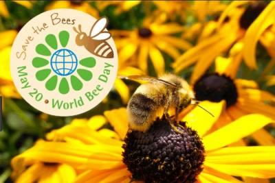مکھیوں کا آج عالمی دن منایا جارہا ہے