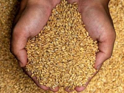 نقل و حمل پر پابندی نہ ہونے سے سندھ میں گندم مہنگی ہوگئی